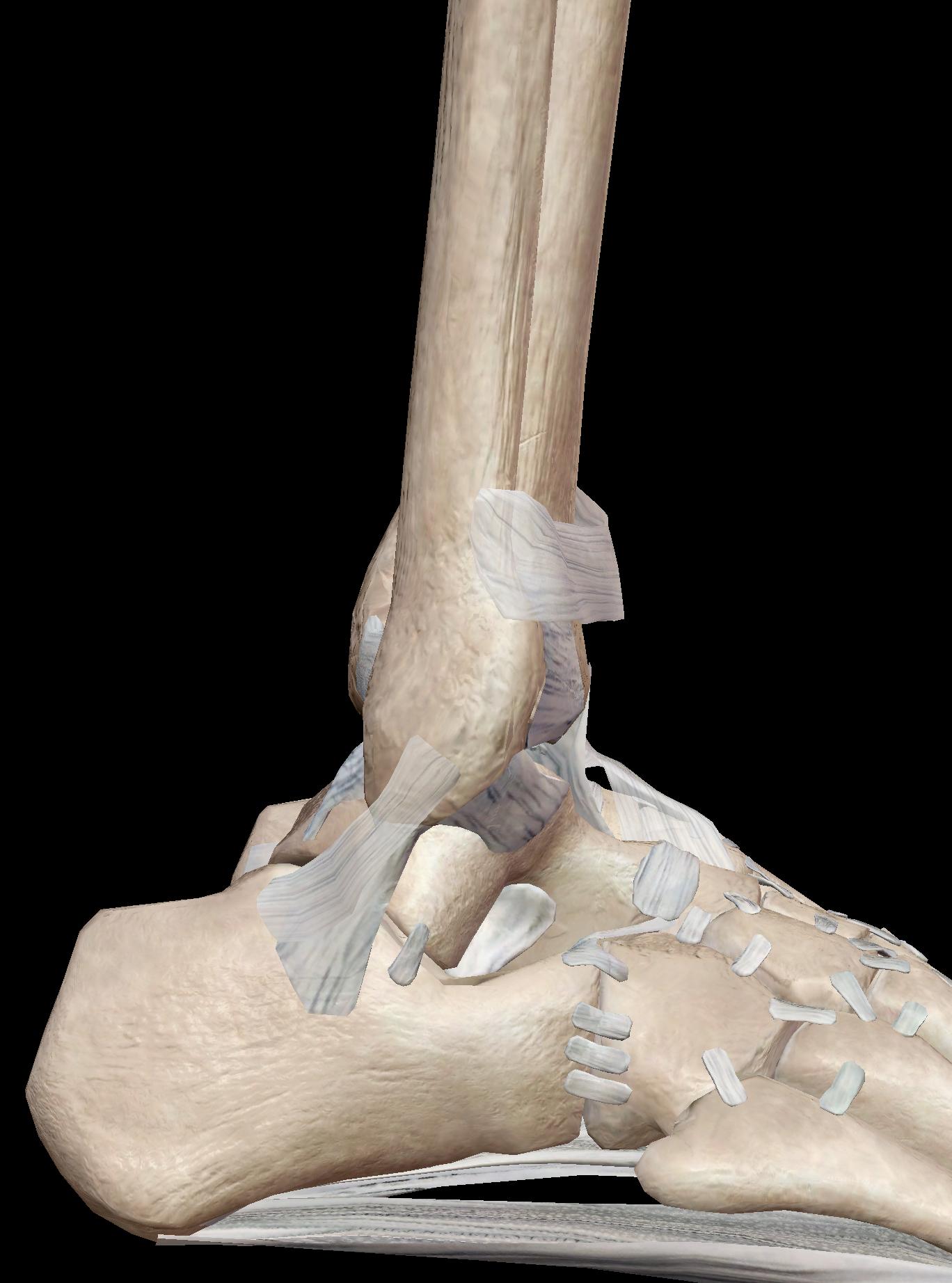 足関節 外側